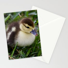 Daisy's Duckling Stationery Cards