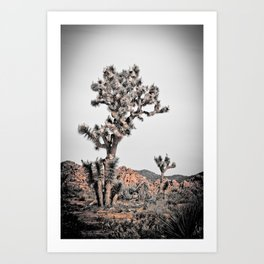 Joshua Tree #22 Art Print