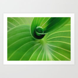 Leaf / Hosta with Drop (2) Art Print