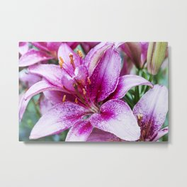 Asiatic Lily 22 Metal Print