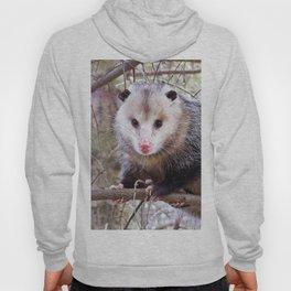Possum Staredown Hoody