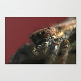 Spider on Red Canvas Print