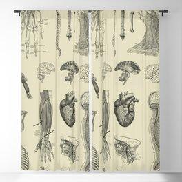 Vintage Anatomy Print Blackout Curtain