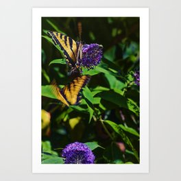 Swallowtails in the Bush Art Print