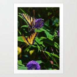 Swallowtails in the Bush Art Print