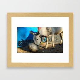 Bovine Beauty Framed Art Print