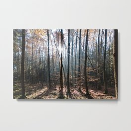 Light Shining in the Forest Metal Print