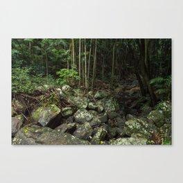 Rainforest Creek Canvas Print