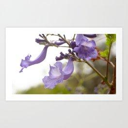 Lilac Explosion Art Print