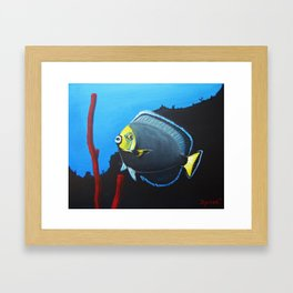 wondering Fish  Framed Art Print