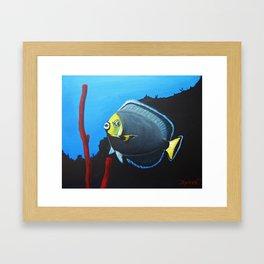 wondering Fish  Framed Art Print