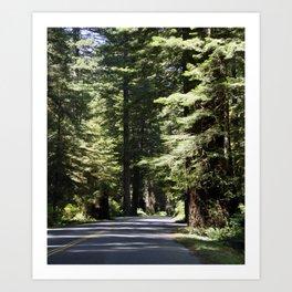 Humboldt State Park Road Art Print