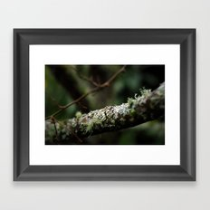 Woodland Framed Art Print