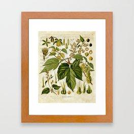 Common Hop Botanical Print on Vintage almanac collage Framed Art Print