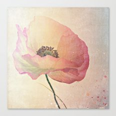 Inspired by the light -- Pink Poppy Flower Canvas Print