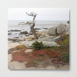 Dead Cypress At Pebble Beach Metal Print