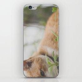 Half a Cat iPhone Skin