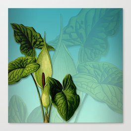 Vivid Arum & Leaves Canvas Print