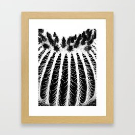Texture Of Cactus  Framed Art Print