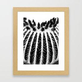 Texture Of Cactus  Framed Art Print