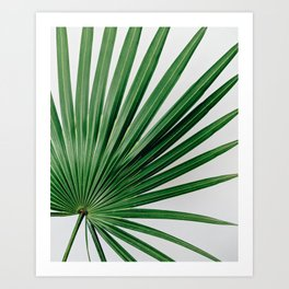 Palm Leaf Detail Art Print