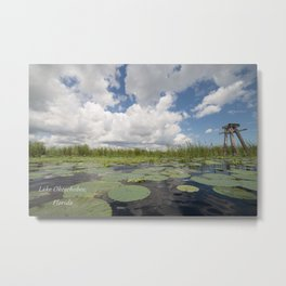 From a Frog's Point of View Metal Print