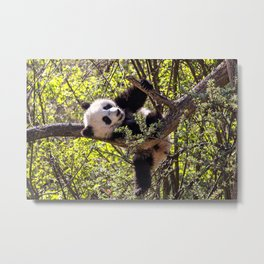 Cute baby panda bear Metal Print