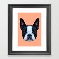 Frenchie / Boston Terrier // Peach / Apricot Framed Art Print
