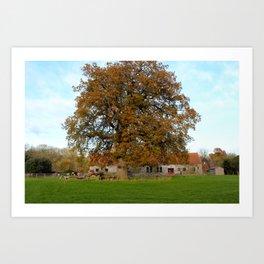 Barn & Oak Art Print