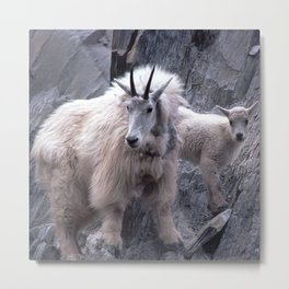 Magnificent Mountain Goat & Baby on Cliff's Edge Metal Print