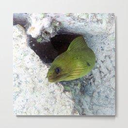 Watercolor Eel, Green Moray Eel 02, St John, USVI Metal Print