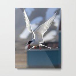 Tern's shriek Metal Print