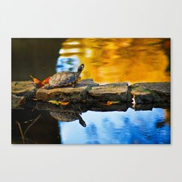 Turtle on the stone Canvas Print
