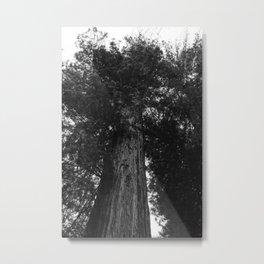 Sequoia National Park IV Metal Print