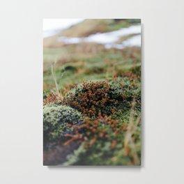Iceland Moss Metal Print