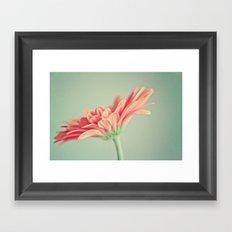 Darling Gerber Daisy  Framed Art Print