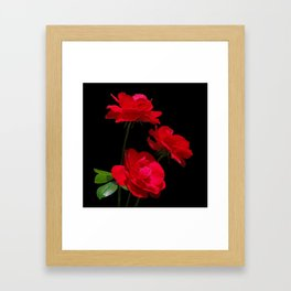 Red roses on black background Framed Art Print