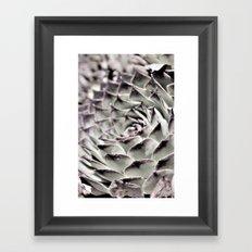 Succulent Close-Up Framed Art Print