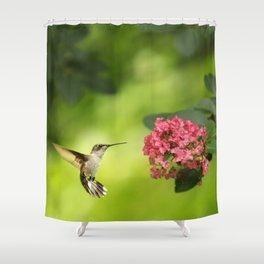 Hummer in Flight Shower Curtain