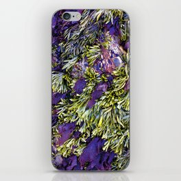 Bolinas Tide Pool iPhone Skin