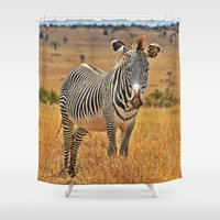 zebra Shower Curtains featuring Zebra by minx267