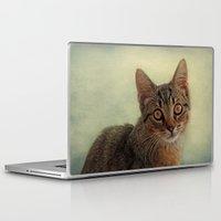 kitten Laptop & iPad Skins featuring kitten by lucyliu