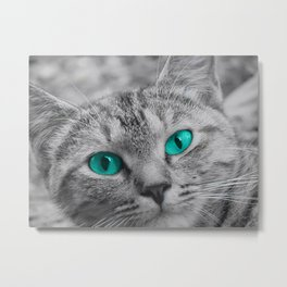 Cat with Piercing Turquoise Eyes Metal Print