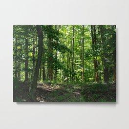 Pine tree woods Metal Print