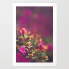 The Pink Orange Art Print