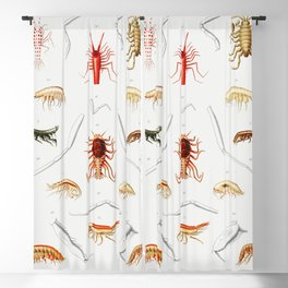 Stomiidae deep sea fish varieties set  from Resultats des Campagnes Scientifiques by Albert I Prince Blackout Curtain