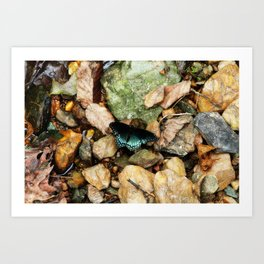 Beauty Everywhere Art Print