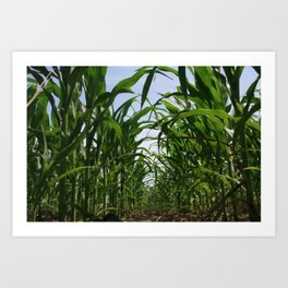 Corn Row Art Print