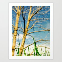 Dew Drops on a Sunny Morning Art Print