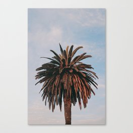 Solo Palm Tree | Venice Beach, California Canvas Print